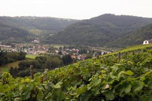 Vynuogynai prie Mozelio, Vokietija