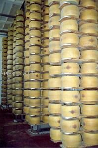 Parmigiano jau bręsta